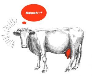 vache-meuh