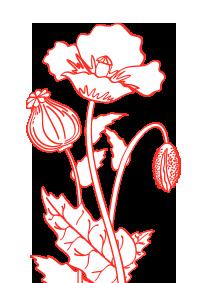 fleur-bloc-vous-etes-concours