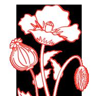 fleurs-crop